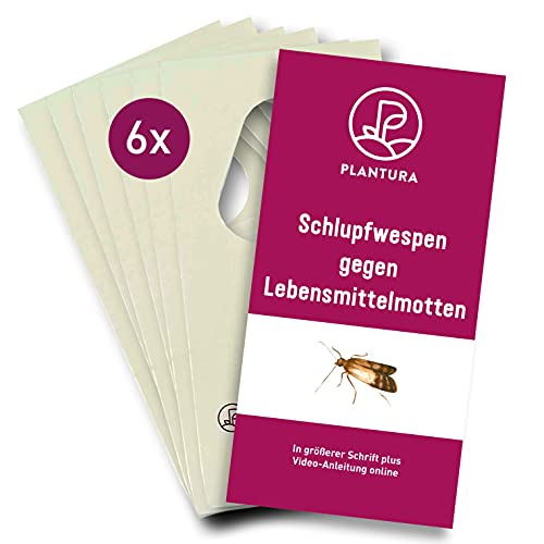 Plantura Schlupfwespen gegen Lebensmittelmotten, Trichogramma, wirksam & nachhaltig Motten bekämpfen, 4 Lieferungen mit jeweils 6 Karten