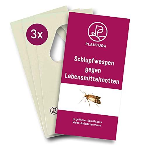 Plantura Schlupfwespen gegen Lebensmittelmotten, Trichogramma, wirksam & nachhaltig Motten bekämpfen, 4 Lieferungen mit jeweils 3 Karten