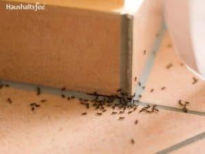 Ameisen an den Fugen