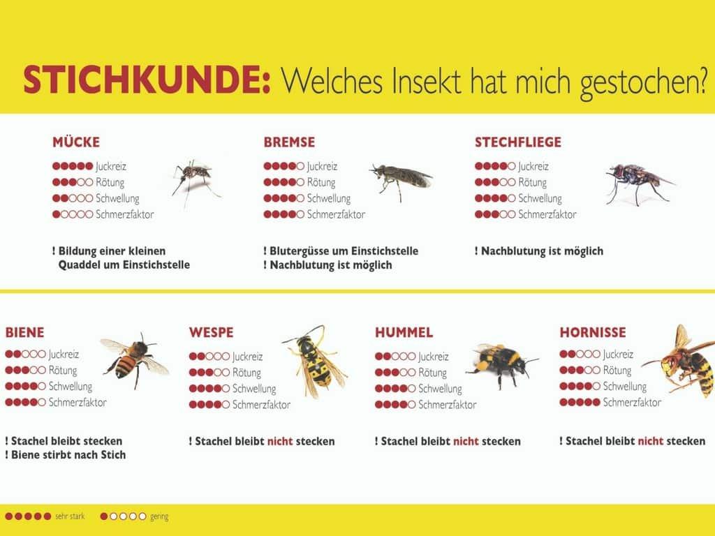 Wie gefährlich sind die Stiche von Bienen und Wespen?