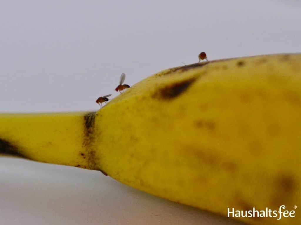 Gegen Fruchtfliegen
