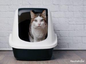 Katze im Katzenklo