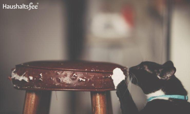 Katze in der Wohnung: Kratzen an Möbeln vermeiden